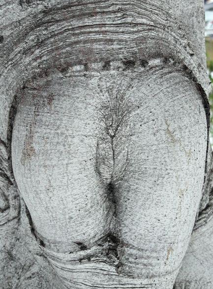 Das ist ein Baum. Nur ein Baum. Natürlich. | 19 Fotos, bei denen Du zweimal hinschauen musst