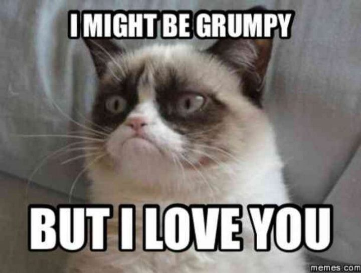 101 Funny I Love You Memes To Share With People You Like Funny Grumpy Cat Memes Grumpy Cat Quotes Cat Quotes Funny
