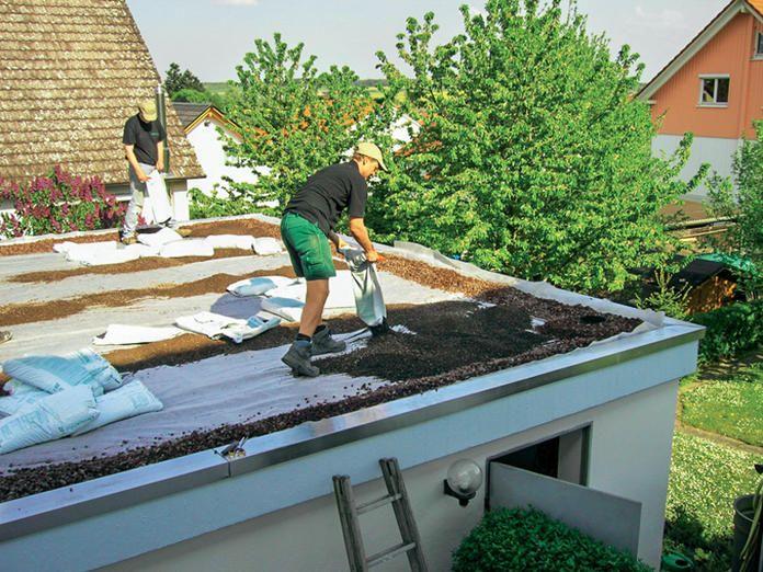 Dachbegrunung Anlage Pflege Und Kosten Dachbegrunung Flachdach Begrunung Flachdach Gartenhaus