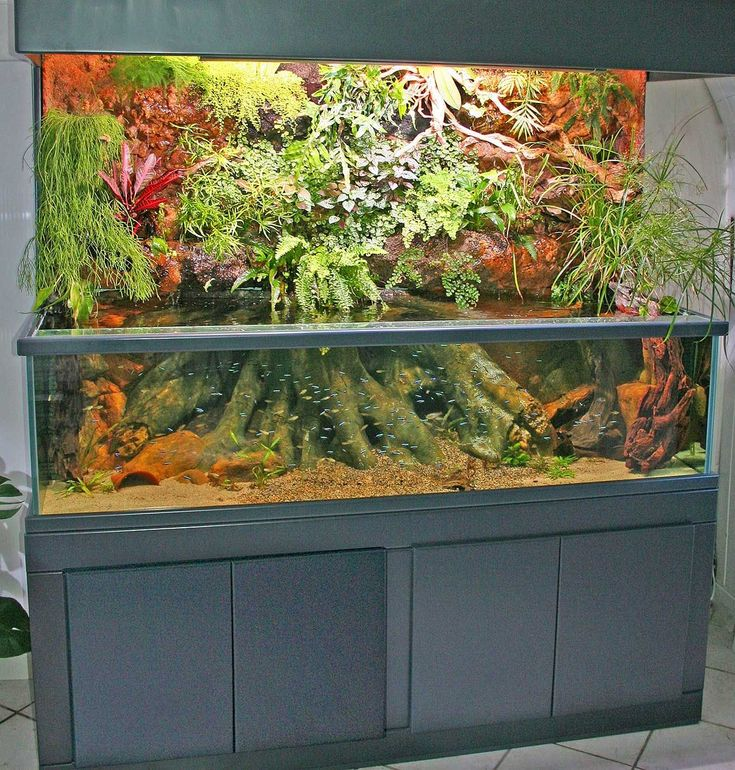 Mur v g tal sur aquarium aqua pinterest mur vegetal for Mur vegetal aquarium