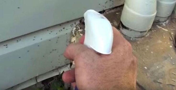 Avec ce mélange naturel, il se débarrasse des fourmis autour de sa maison! - Trucs et Astuces - Ayoye