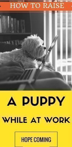 how to potty train a puppy, puppy potty training, how to potty train a dog, how to house train a puppy, how to house train a dog, potty training dogs, potty training puppy, dog potty training, toilet training puppy, puppy training tips, best way to potty #puppytrainingpotty #dogtraining #puppytrainingtips #puppypottytrainingtips