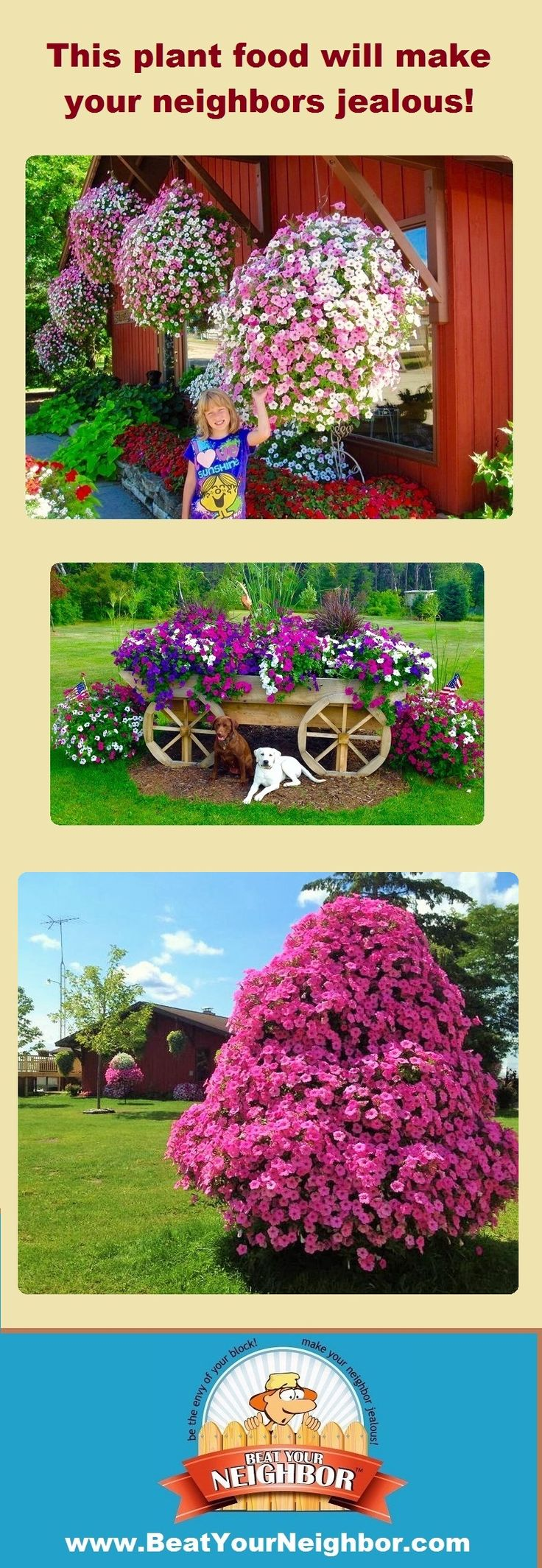 If you want huge flowers this year, you need to check out www.BeatYourNeighbor.com