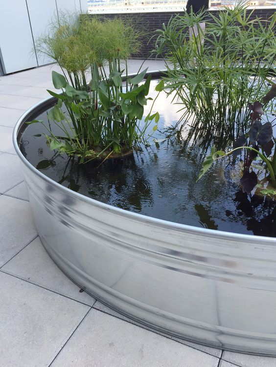 Over Sized Galvanized Steel Tanks With Aquatic Plants.  Www.ContainerWaterGardens.net