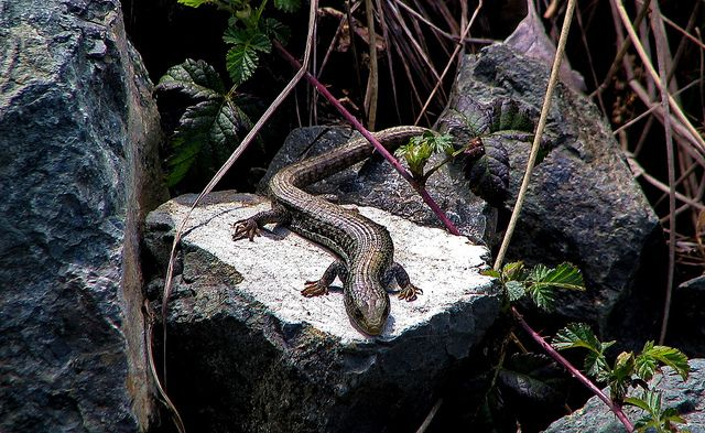 107 best images about Reptiles in Canada on Pinterest ...