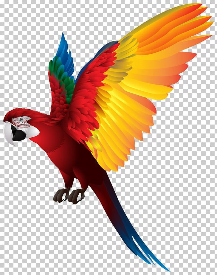 Red Breasted Pygmy Parrot Bird Png Clipart Beak Bird Birds Clip Art Clipart Free Png Download Bird Nature Desktop Wallpaper Parrot Bird
