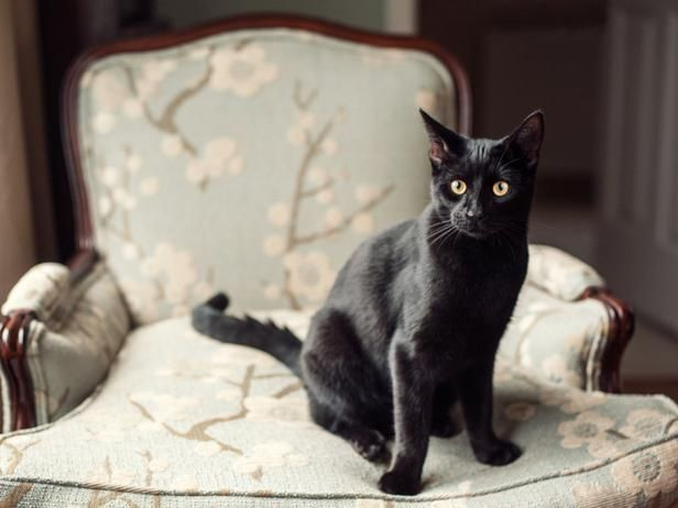 If you have furniture you want to keep cat-hair free, unsoiled or intact, train your cat to stay off of it. They dislike sticky tape, citrus-scented air fresheners and aluminum foil. Placing these items on or near the piece will deter your cat from scratching, walking or sleeping on it. > http://www.hgtv.com/decorating-basics/how-to-outsmart-your-cat-and-have-a-stylish-home/pictures/index.html?soc=pinterest: Cats, Cat Walks, Pet, Cat Life, Cat Ems And Ems, Outsmart, Keep Cat Off Furniture, Homes, Cat Hair Free