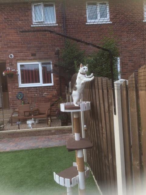 ProtectaPet Ltd's photos: cat garden fence. safe cat.