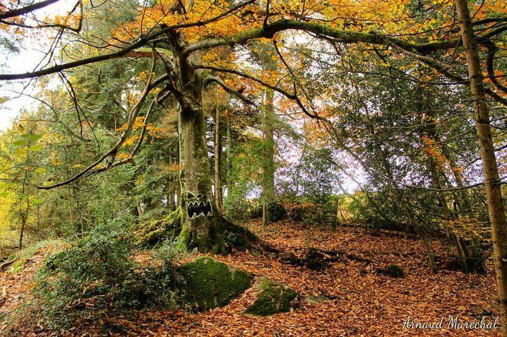 L'arbre maléfique!  #arbre #tree #automne #autumn #scary #effrayant #lasouterraine #creuse #limousin #nouvelleaquitaine #pickoftheday #photodujour