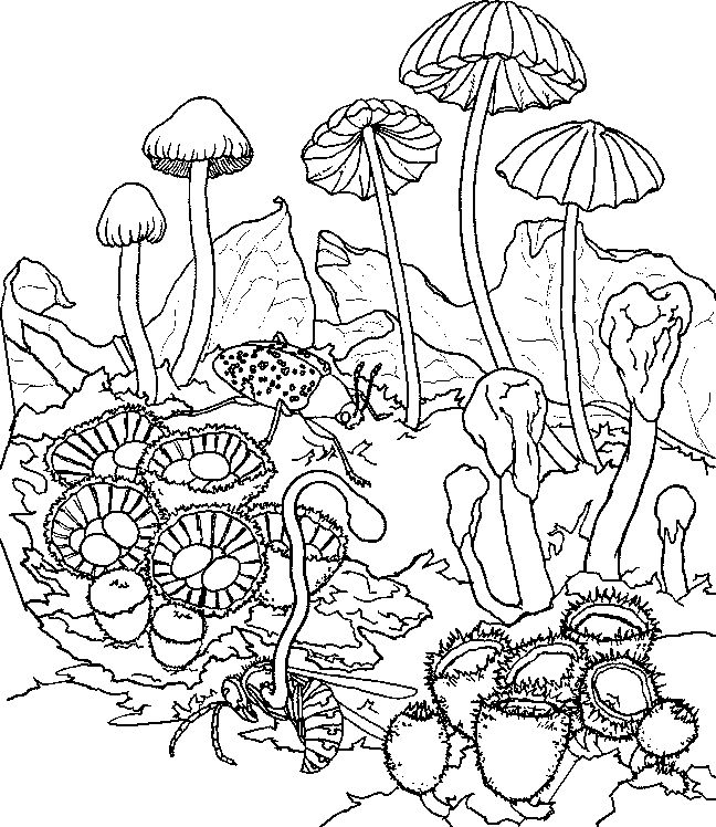 45 best coloring pages images on Pinterest | Coloring books ...