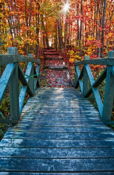 Bridge leading to fall foliage in Mont Orford National Park, Quebec. This is a free stock photo by the way, with some commercial uses allowed under the following terms: http://freestock.ca/terms_of_use.php