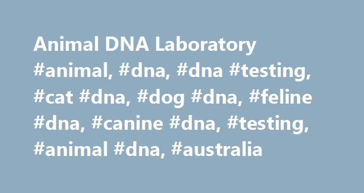 Animal DNA Laboratory #animal, #dna, #dna #testing, #cat #dna, #dog #dna, #feline #dna, #canine #dna, #testing, #animal #dna, #australia http://florida.nef2.com/animal-dna-laboratory-animal-dna-dna-testing-cat-dna-dog-dna-feline-dna-canine-dna-testing-animal-dna-australia/  # WORLDWIDE TESTING DIRECTLY TO BREEDERS AT AFFORDABLE PRICES Animal DNA Laboratory is an Australian based company dedicated to providing efficient, affordable and friendly animal DNA testing to breeders and owners…