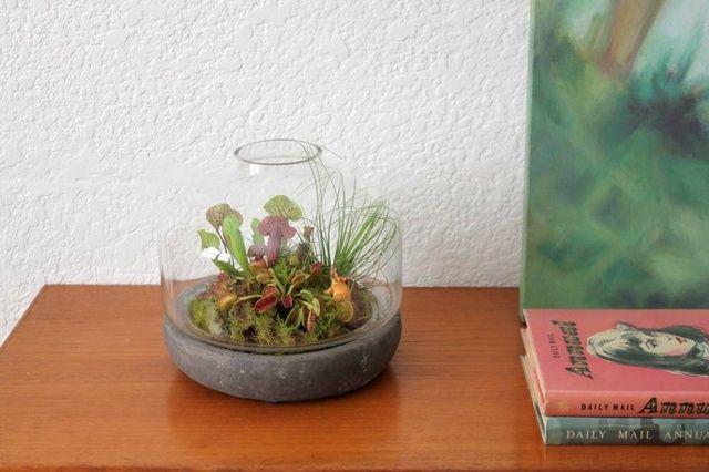 Terrarium Pflanzen Pflege Tipps Sommer Sonne liebenden