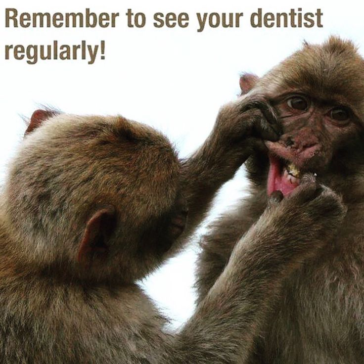 Remember to see your dentist regularly !#dentistry #dental #drdinaaa #dentalgram #Oralhealth #oralcare