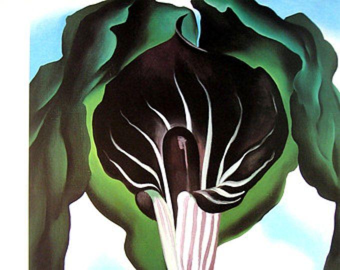 Georgia O'Keeffe Drucken - Jahrgang 1987 botanische Print - Jack auf der Kanzel, Nummer 3 - große 16 x 13