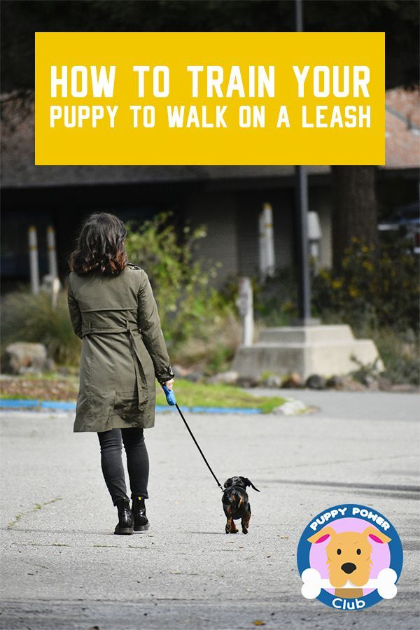 How To Train Your Puppy To Walk On A Leash Training Your Puppy