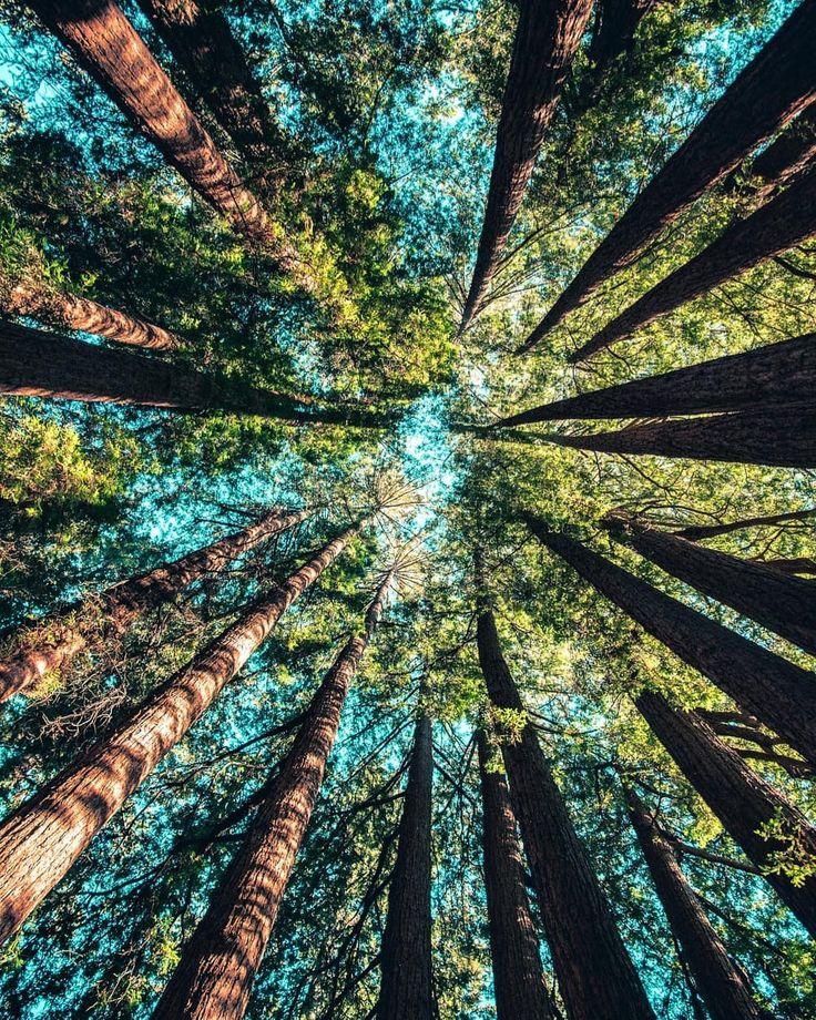 Wer ist auch so gerne im Wald von euch? #wood #woods #baum #bäume #forest #int