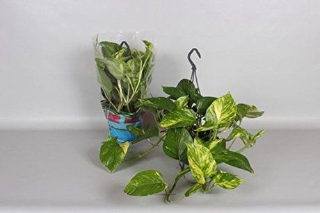 Shop now for eco-friendly garden supplies and plants delivered right to your doorstep