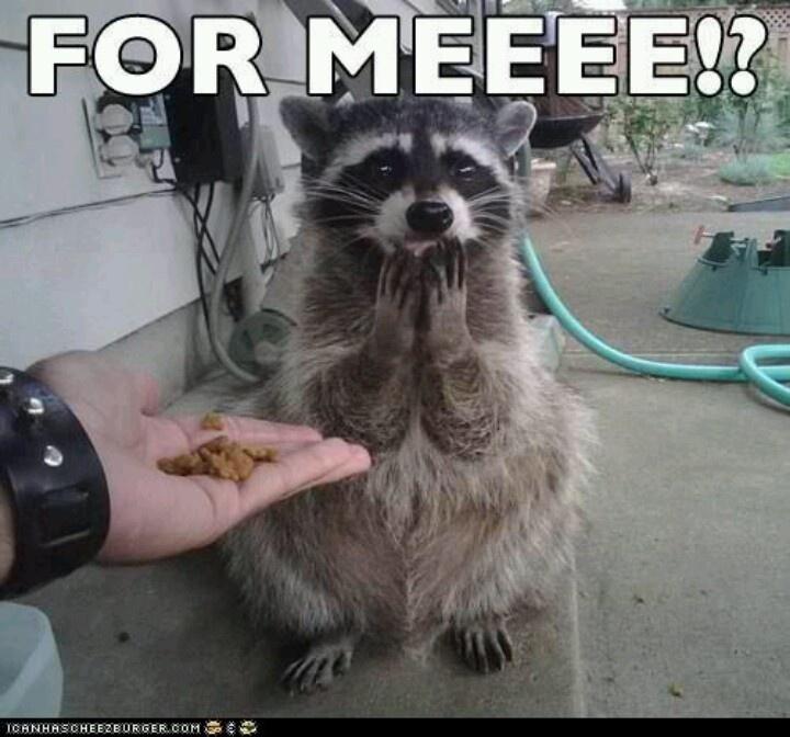 Best 25+ Cute Birthday Meme Ideas On Pinterest
