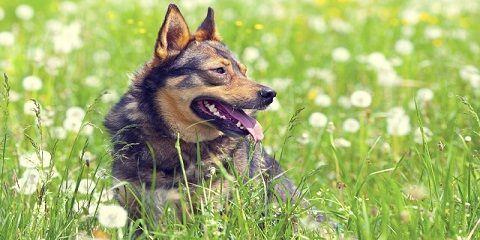 Tips cara melatih anjing agar berani, mental kuat, percaya diri tinggi http://www.anjinglovers.com/cara-melatih-anjing-agar-berani/ #anjing #anjinglovers #anjinglover #dog #doglover #pet #petlover #animal #caramelatihanjingpemberani #pelatihananjing #caramelatih anjing