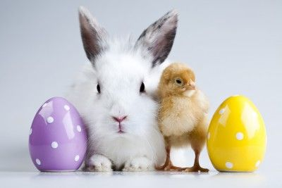 Ethical Easter | Consume With Care