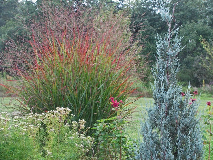 best gardening zone a ornamental grasses and salvias images, Natural flower