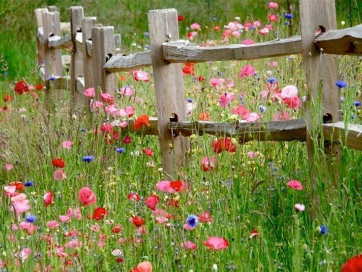 Grasstrook met 's zomers wilde bloemen en wintergroene planten voor de wintermaanden, met erop een natuurlijk houten hek, als afscheiding van de hondenlaan en het fiets- en het wandelpad van de Oosterspoorbaan Assorted wild flowers show their simple charm near an old split rail fence.