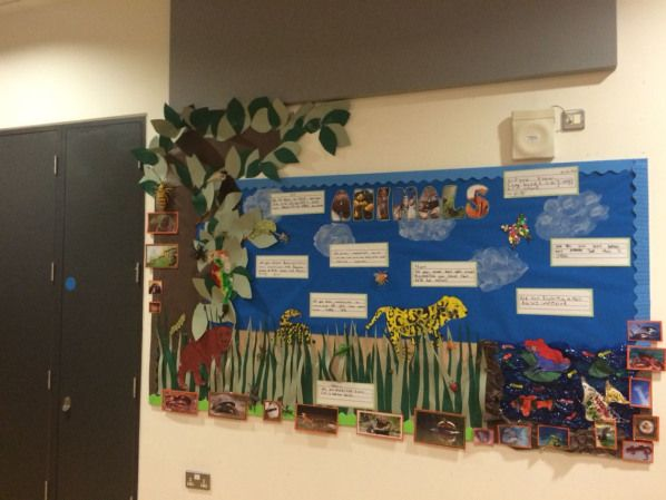 Animal classifications board. Year 1. Collage work #technology #technology #bulletin #board