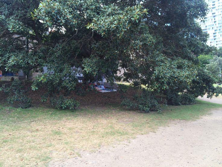 Secret Location under the Magnificent Moreton Bay Fig