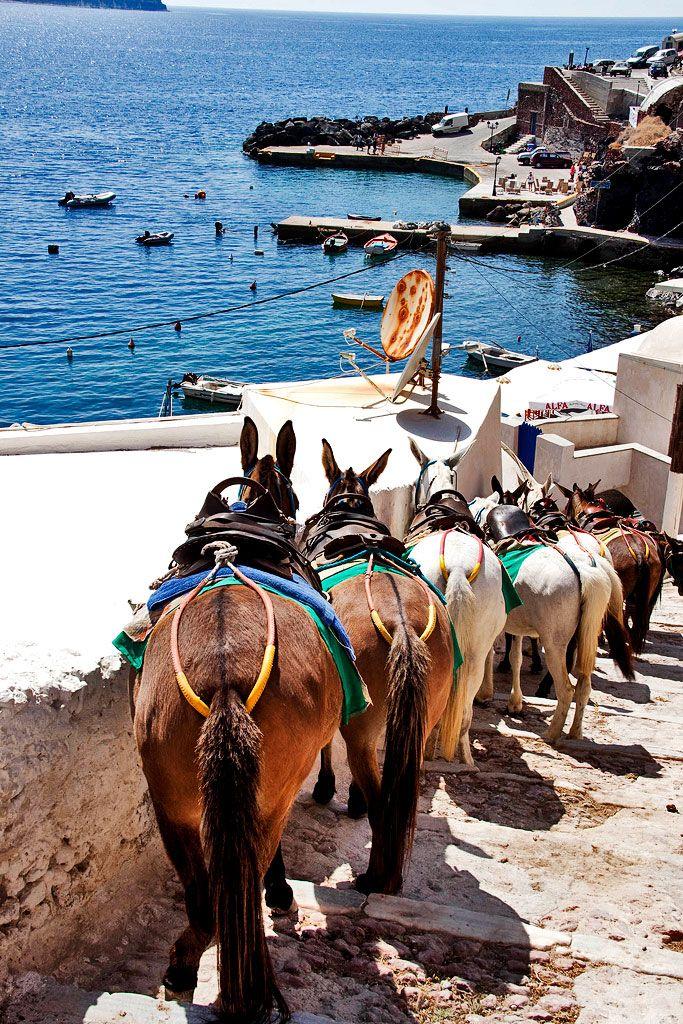 Mules in Ammoudi - Oia, Santorini