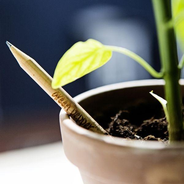Bleistift zum Einpflanzen