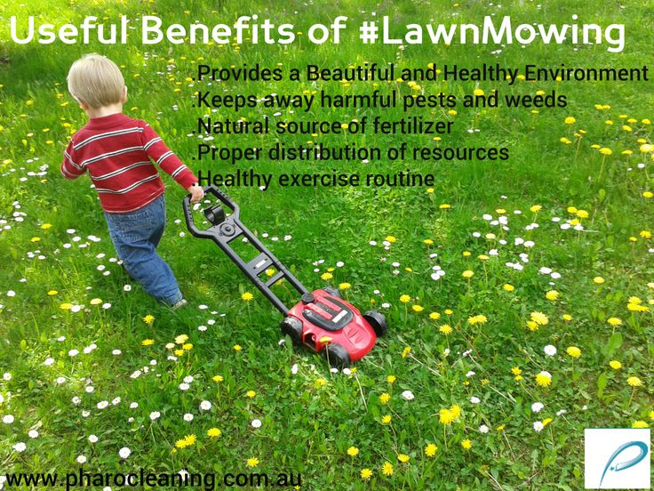 Regular mowing will help to keep your garden clean and it helps to maintain the bright green color of the grasses.