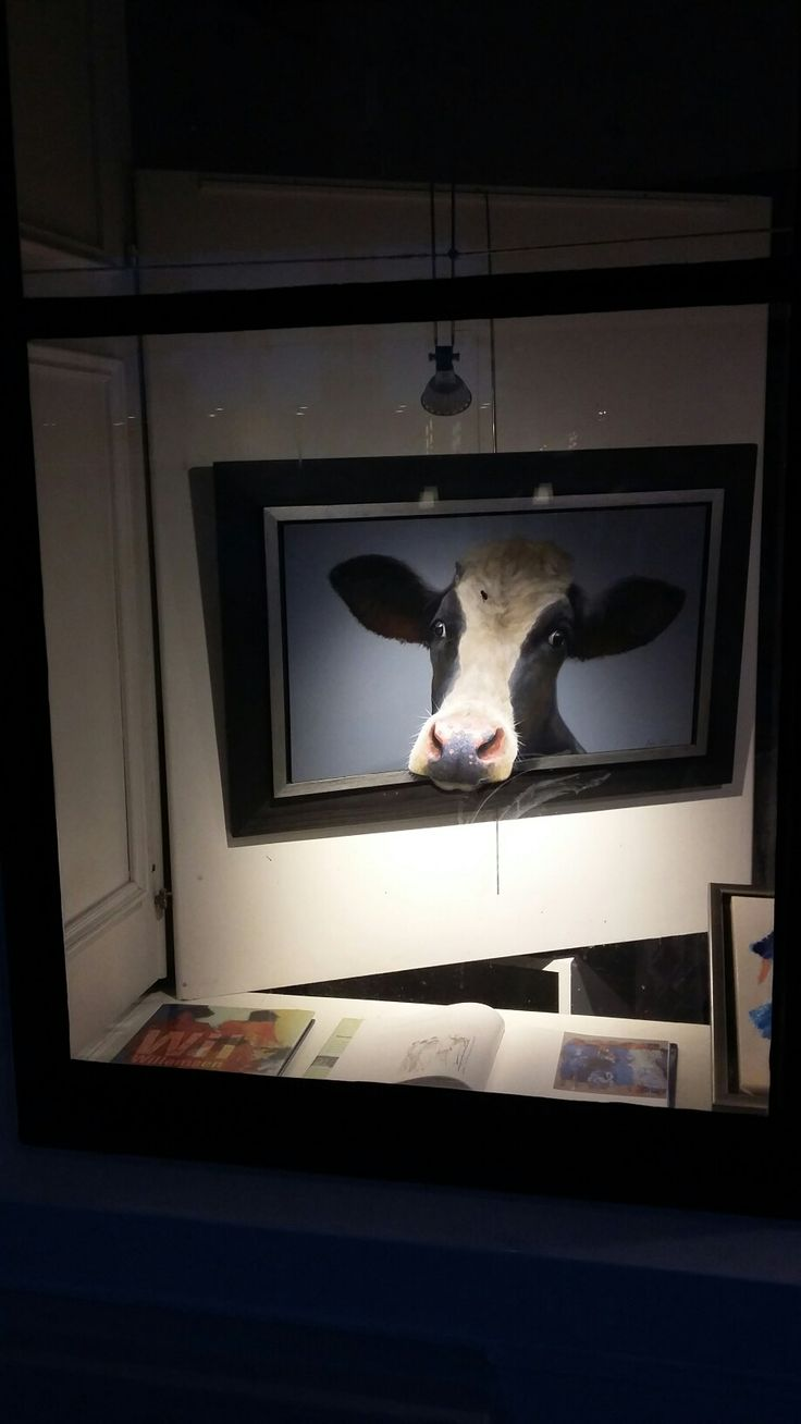 Wow cow in Middelburg