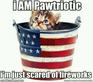Happy 4th!  Hug your pets, it's a frightening day for them.Cat, 4Thofjuly, Best Friends, Fourth Of July, 4Th Of July, Patriots, Kitty, Happy 4Th, Animal