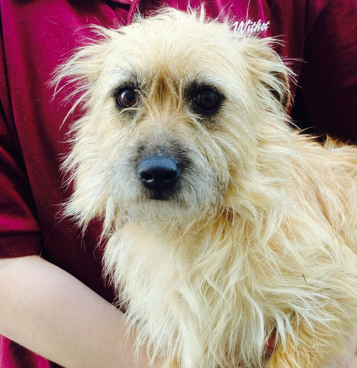 Spencer is a social, 1yearold, male Terrier mix who