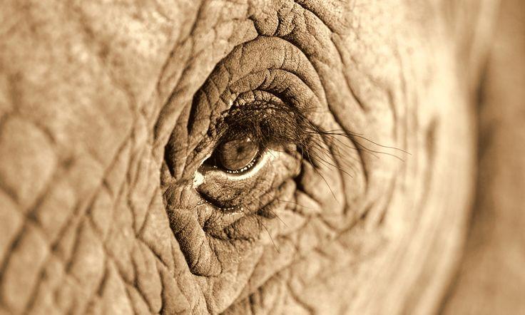 http://www.huffingtonpost.com/2014/06/15/satao-the-elephant-killed_n_5497799.html