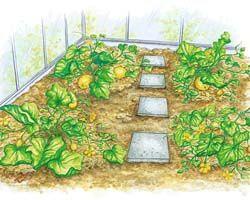 Melone 4 Pro Pflanze sollten Sie maximal sechs Melonen ausreifen lassen, der Rest wird entfernt. Betten Sie die Früchte auf Stroh, damit es auf der feuchten, humusreichen Erde im Gewächshaus nicht zu Fäulnisbefall kommt. Ab August sind die Melonen erntereif.