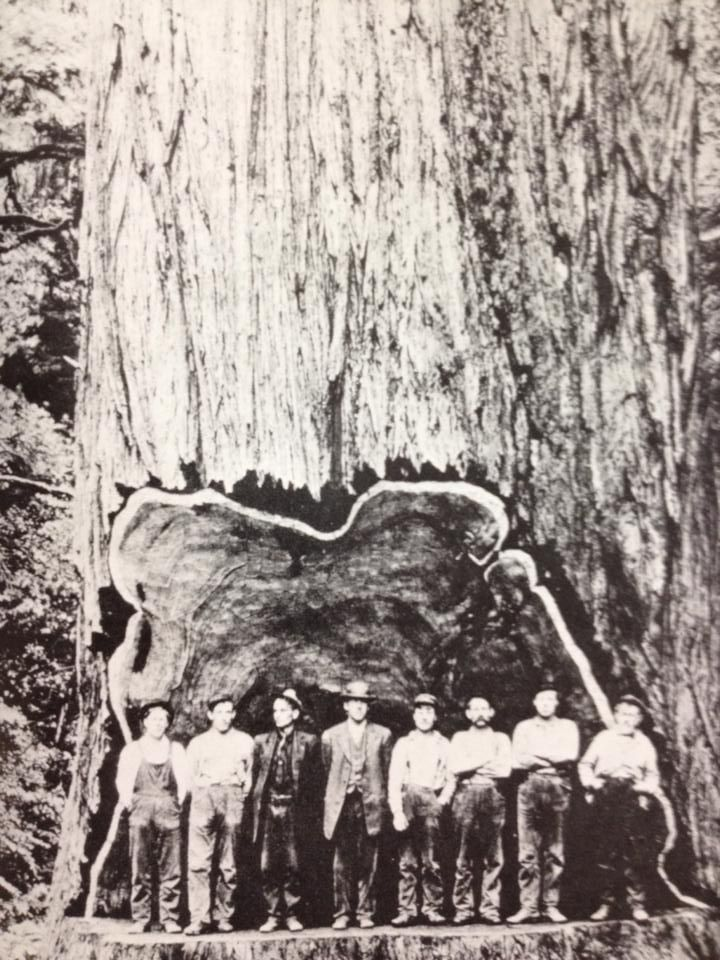 Justin Bevans Old Logging Pictures There is some controversy whither it is Redwood or Cedar. any advice?