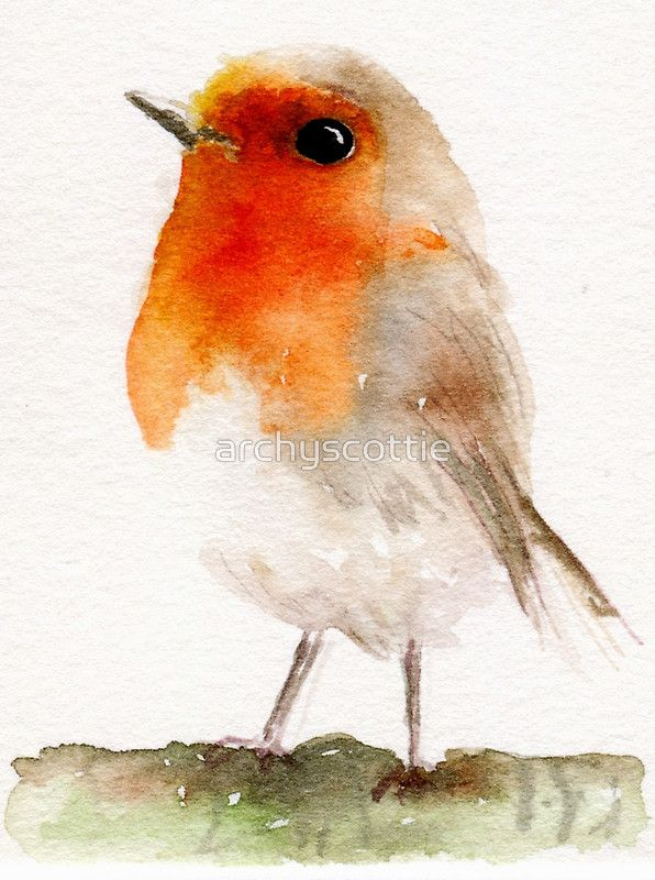 Robin Bird by archyscottie                                                                                                                                                      More