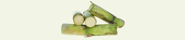 Les Laboratoires Copmed ont décidé de mettre en pratique l'esprit et la lettre des directives du Grenelle de l'environnement en lançant le premier pilulier zéro pétrole, en plastique végétal PE issu de la canne à sucre, 100 % biodégradable et 100 % recyclable.