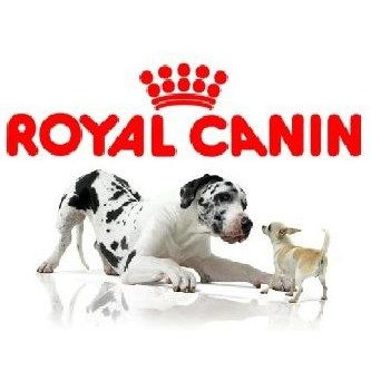 Free Can of Royal Canin Dog Food - http://getfreesampleswithoutsurveys.com/free-can-of-royal-canin-dog-food