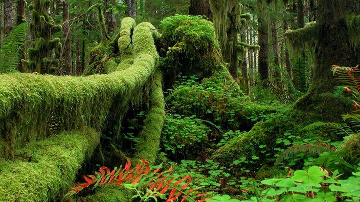 Olimpik Ulusal Parkı - Washington, ABD