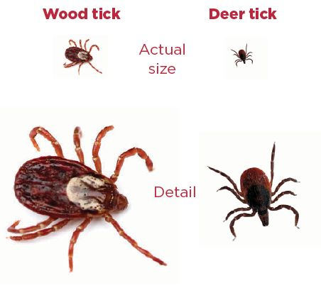 Lyme Disease Minnesota Parent See The Difference