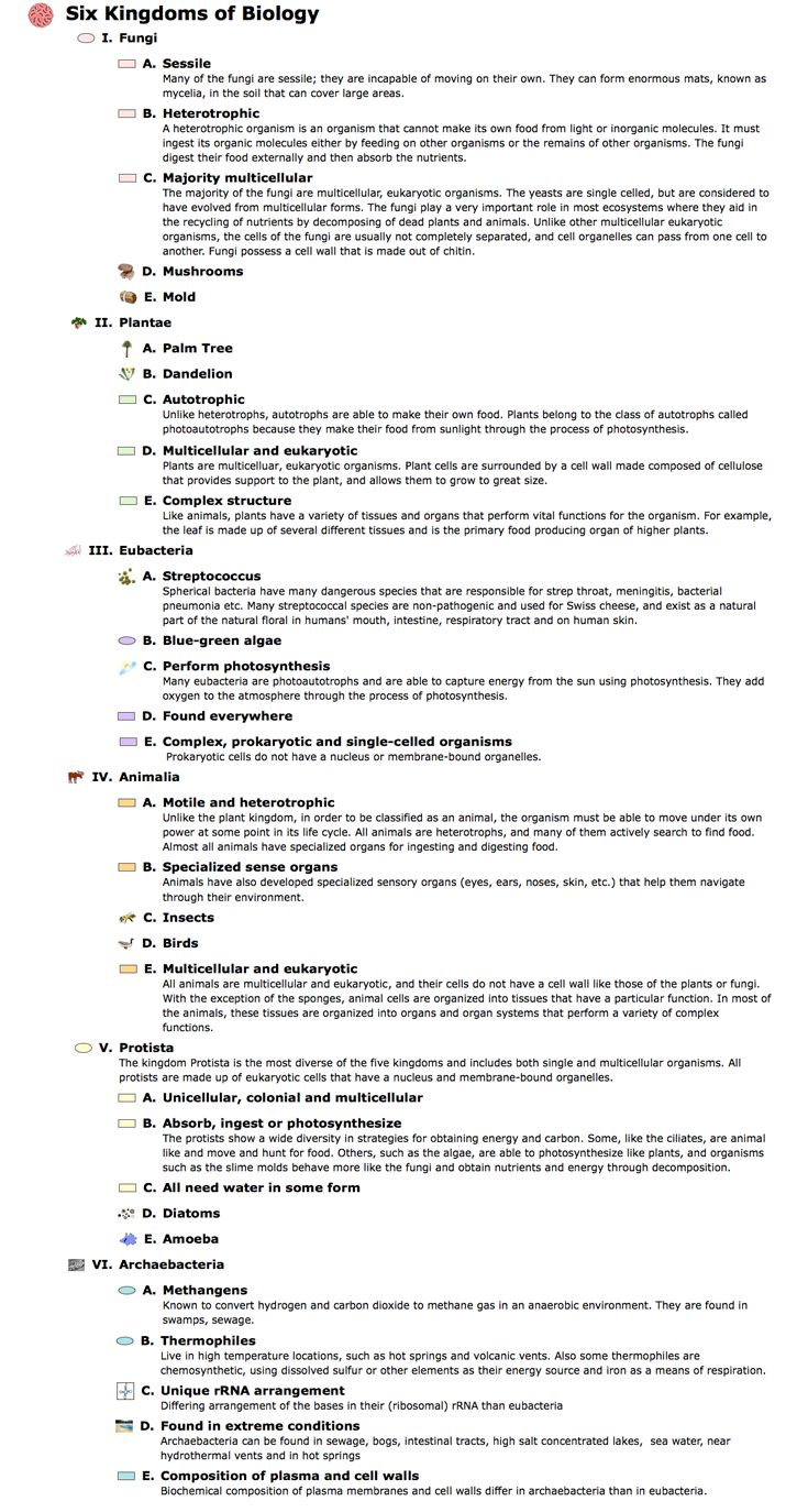 worksheet Taxonomy Classification Worksheet the 25 best classification of humans ideas on pinterest life science outline six kingdoms