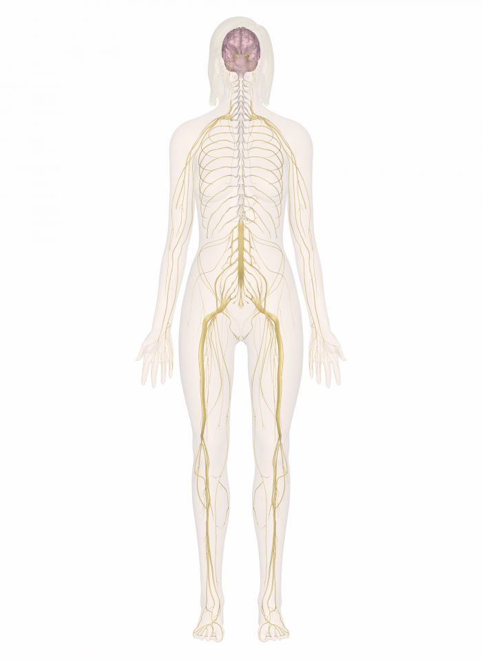 14 Best Major Body Systems Images On Pinterest Body Systems Human