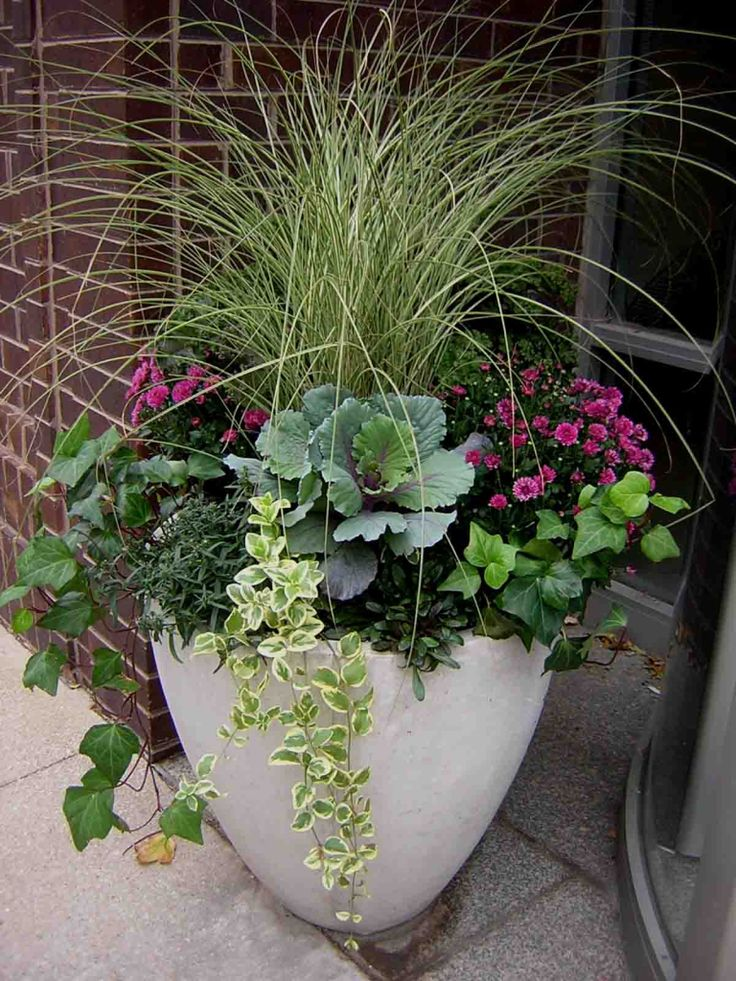 Fall container planting | Grasses, mums, ornamental kale, ivy