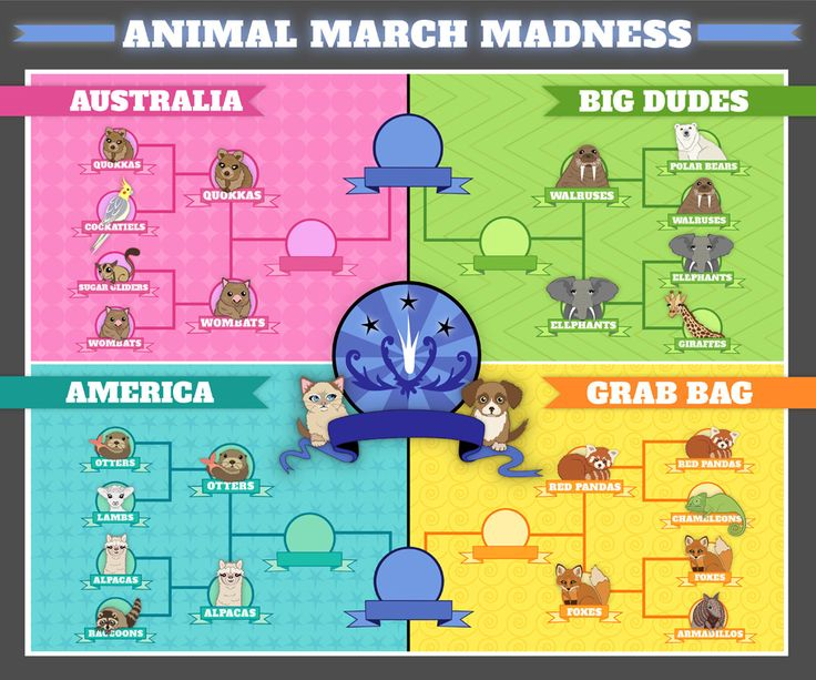 And here's the updated bracket! | Animals March Madness: First RoundResults