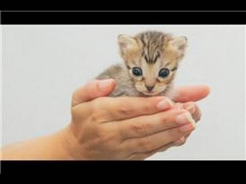 Can You Touch Newborn Kittens Yes But You Have To Be Very Careful Newborn Kittens Weigh Only A Few Ounces And A In 2020 Kitten Care Newborn Kittens Cute Kitten Gif