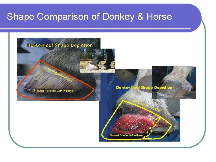5bd1bcb94425f68122cd96a19468dc2a donkey and mule hooves slideshow natural equine hoof care