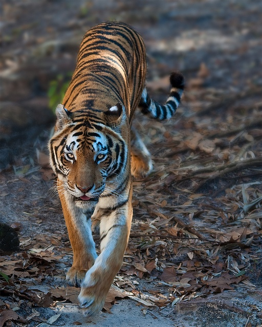Cat Walk by Tiger'sEye, via Flickr